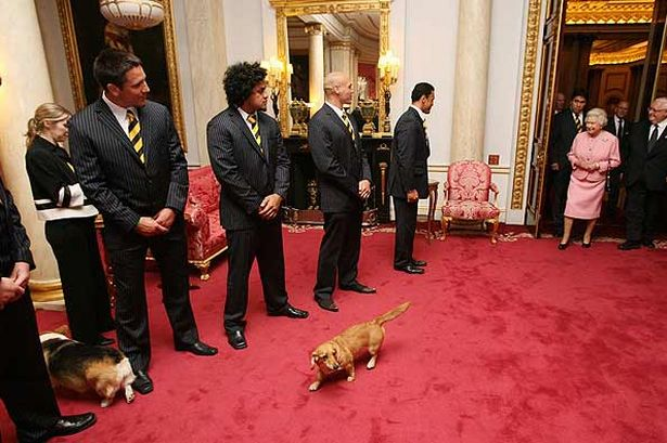 The Queen and her corgis meet the New Zealand Rugby Team (source)